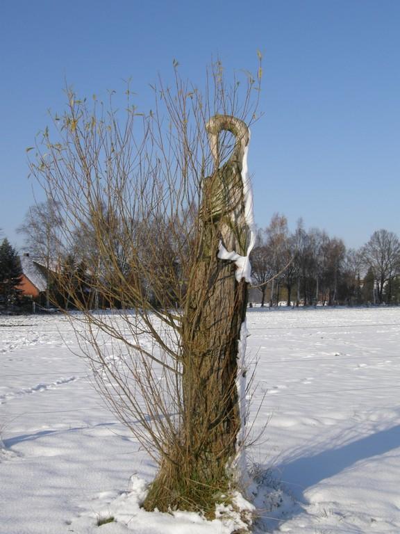 Störche November 2008