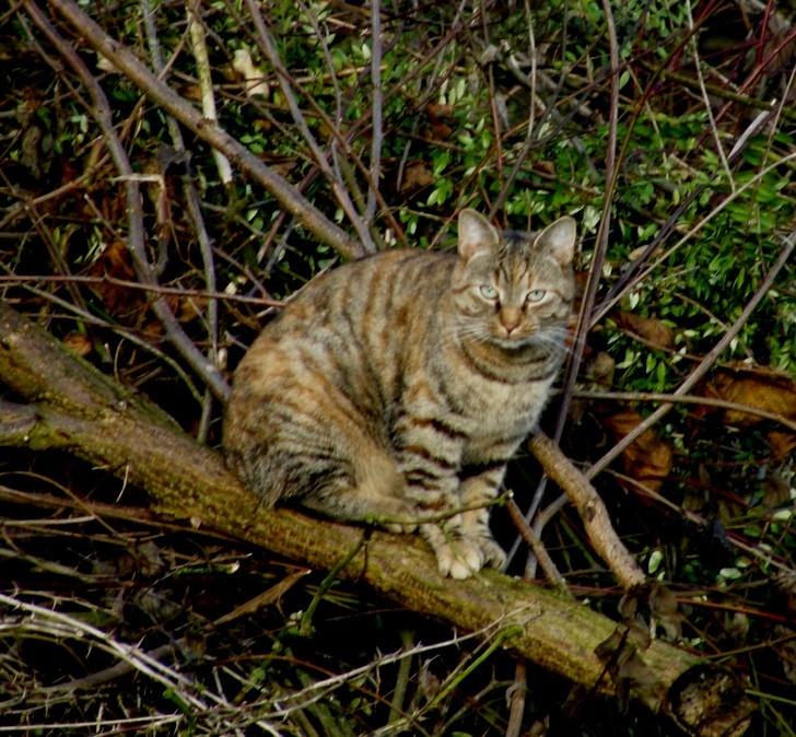 mäusefangender Besuch aus der Nachbarschaft (Nov. 2009)