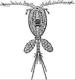 Foto: Grafik eines Hüpferlings