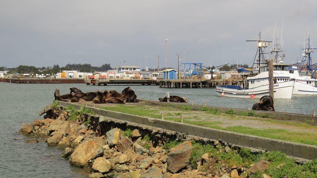 Seelöwen in Crescent City
