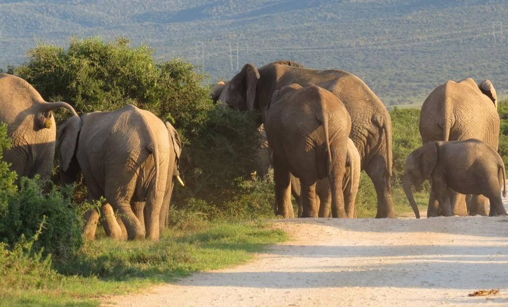 8 Uhr: endlich Elefanten