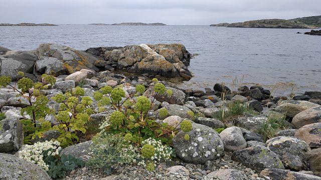 Schärenküste bei Smarholmen