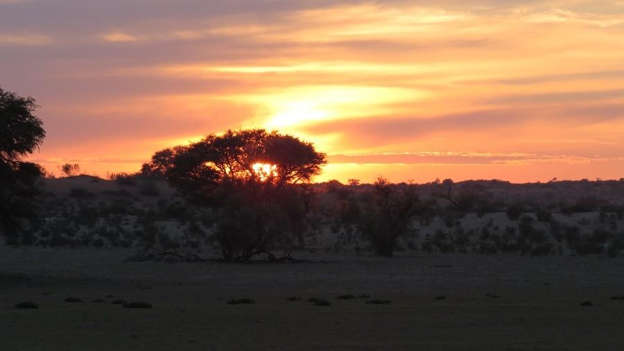 Sonnenaufgang am letzten Pirschtag