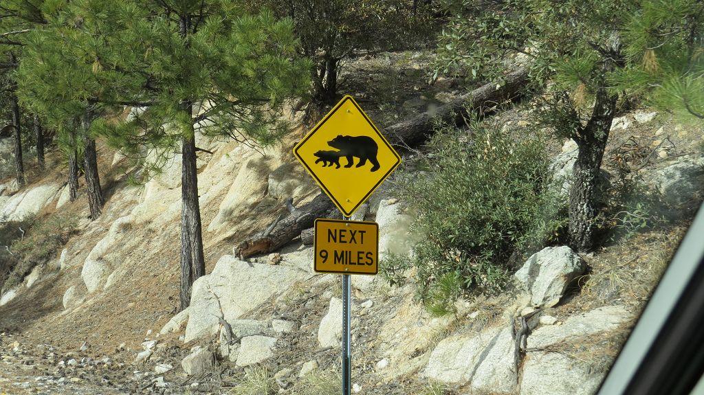 Über 40 Schwarzbären sollen hier leben
