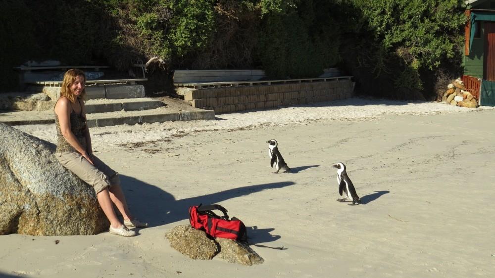 Pinguine am Boulder's Beach