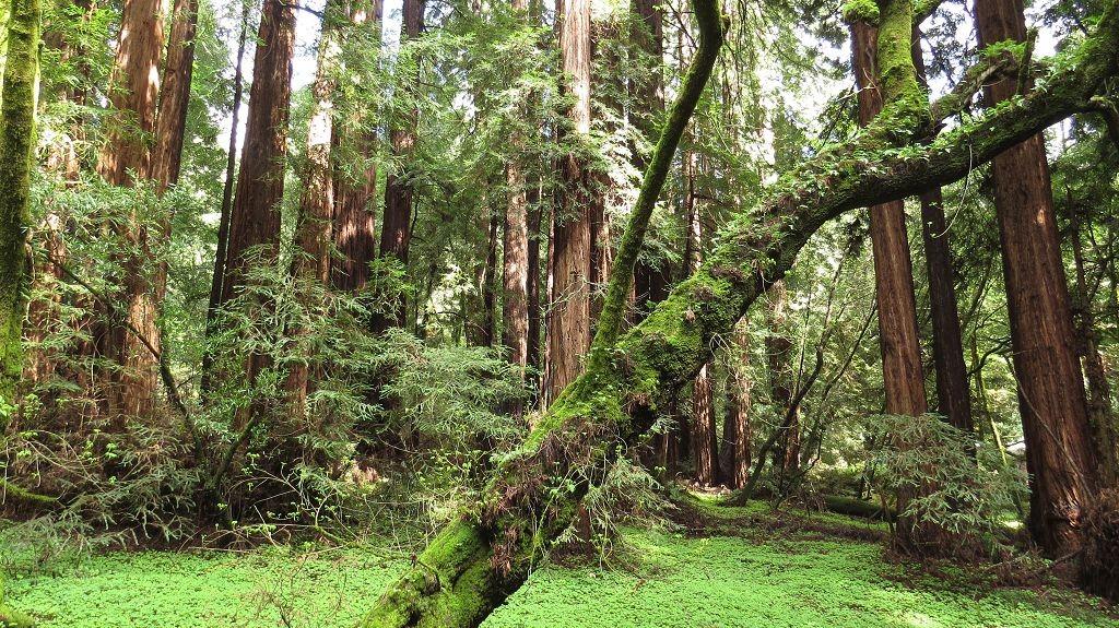 Muir-Wood Nationalpark