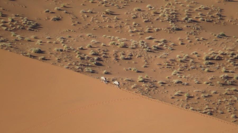 Oryx auf den Dünen...