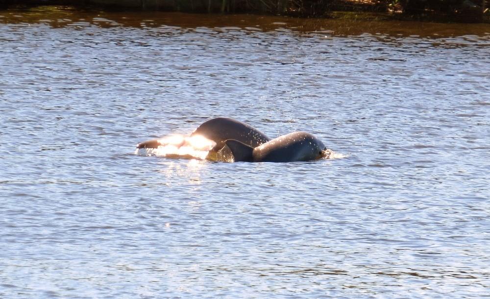 ...mit Delfin-Beobachtung.