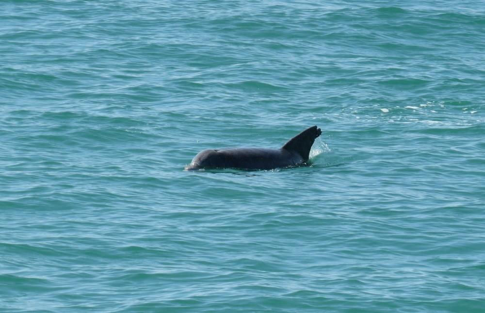 Hier kann man gut Delfine beobachten