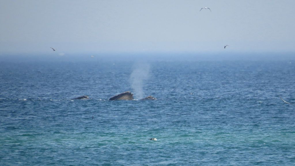 Whale-Watching auf Cape Cod