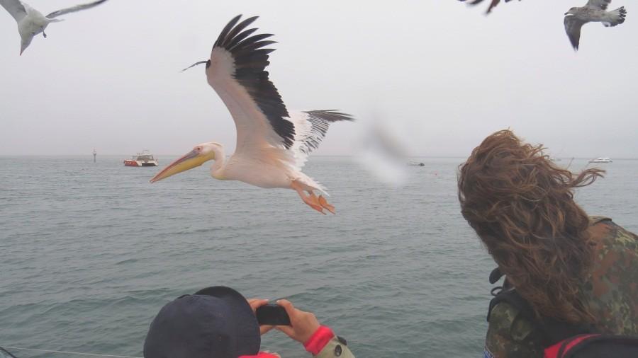 Pelikane und...