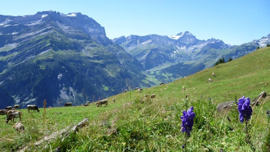 Wanderung: Elm - Gamperdun - Fanenstock - Ramin - Elm