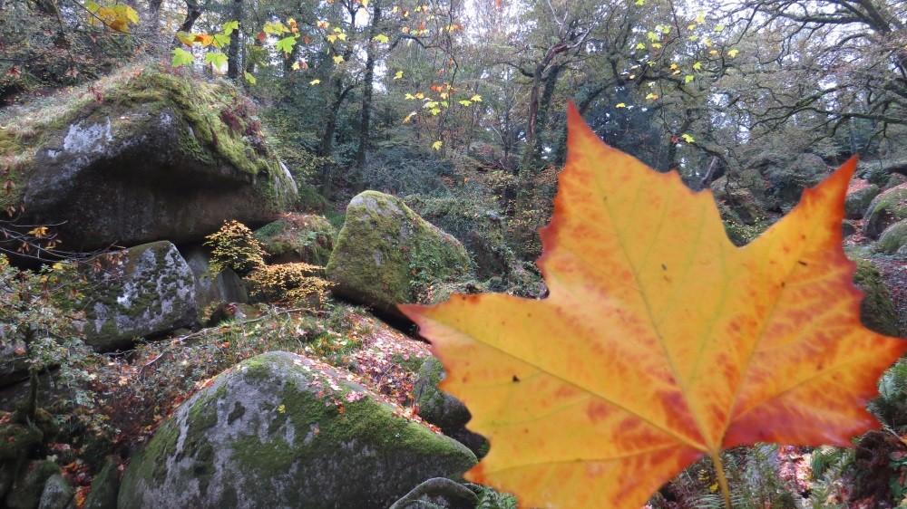 Elfenwald bei Huelgoat