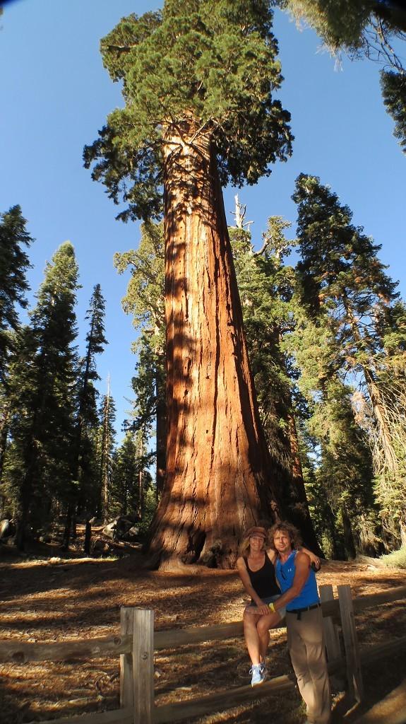 General Grand Tree