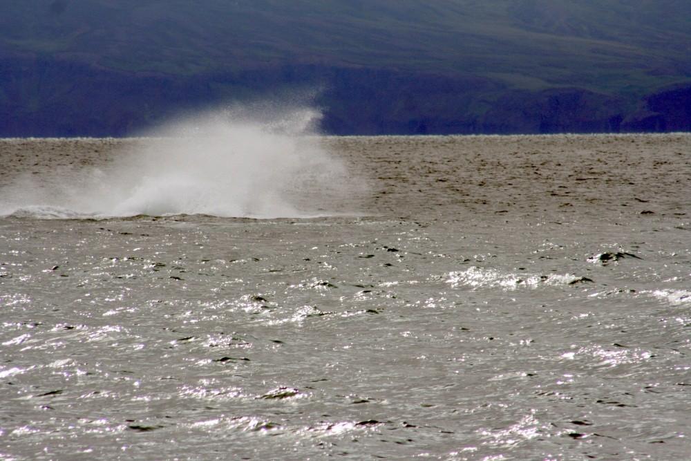 Hier war gerade der Wal gesprungen