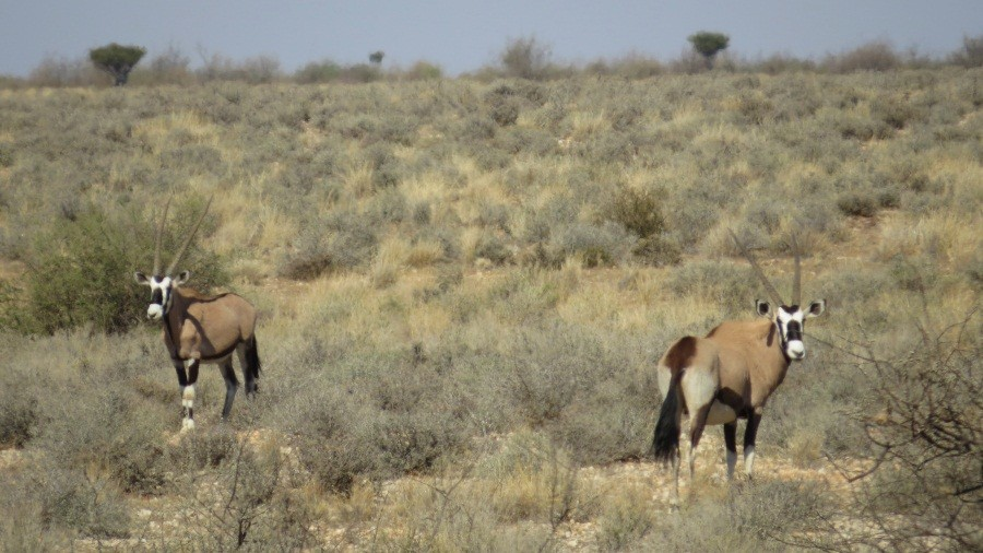Unterwegs zur Kalahari Anib Lodge