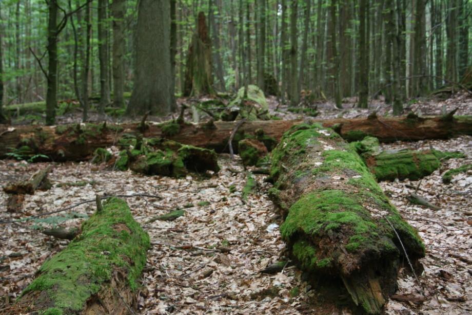 Auf dem Urwaldsteig unterwegs