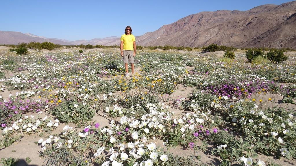 Wildblumenblüte in der Wüste
