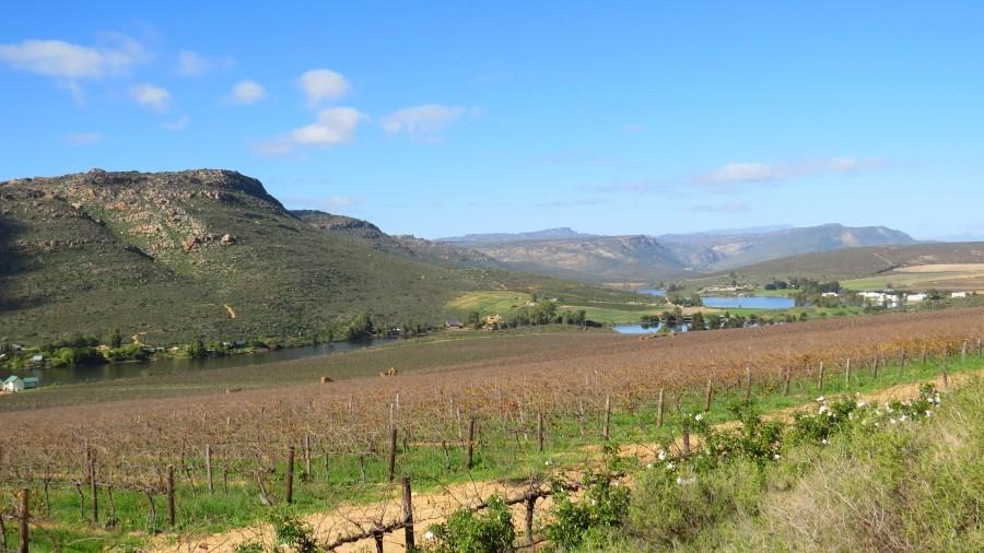 Weinbau entlang der Cape-Namibia-Route
