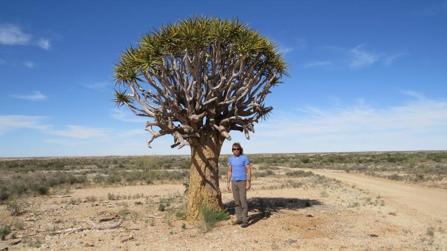 Axel mit Köcherbaum