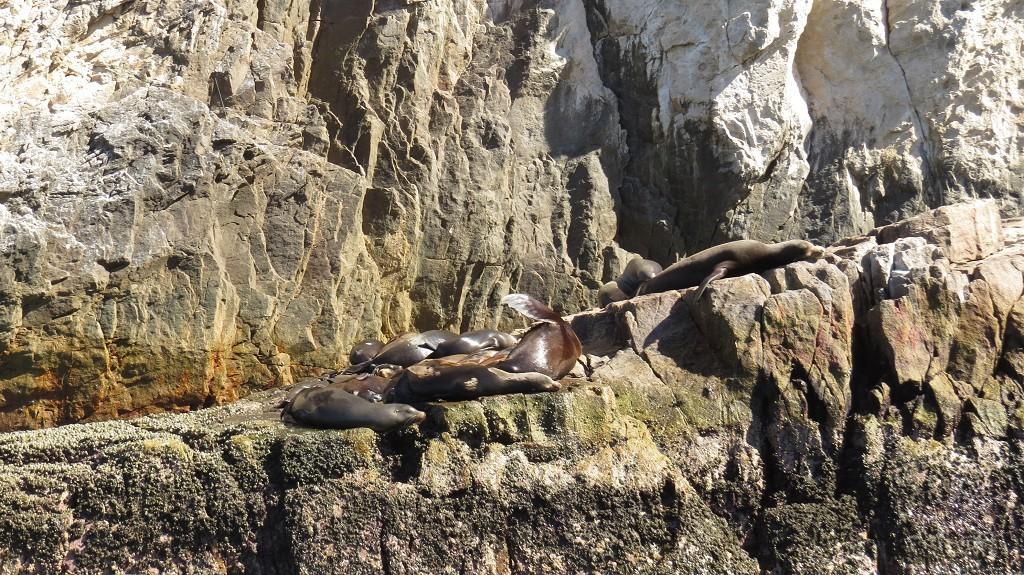Seelöwen (boah, stinken die!)