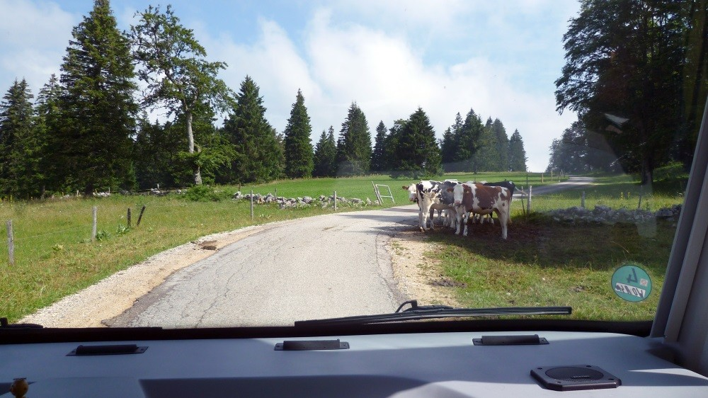...die Kühe wundern sich schon.