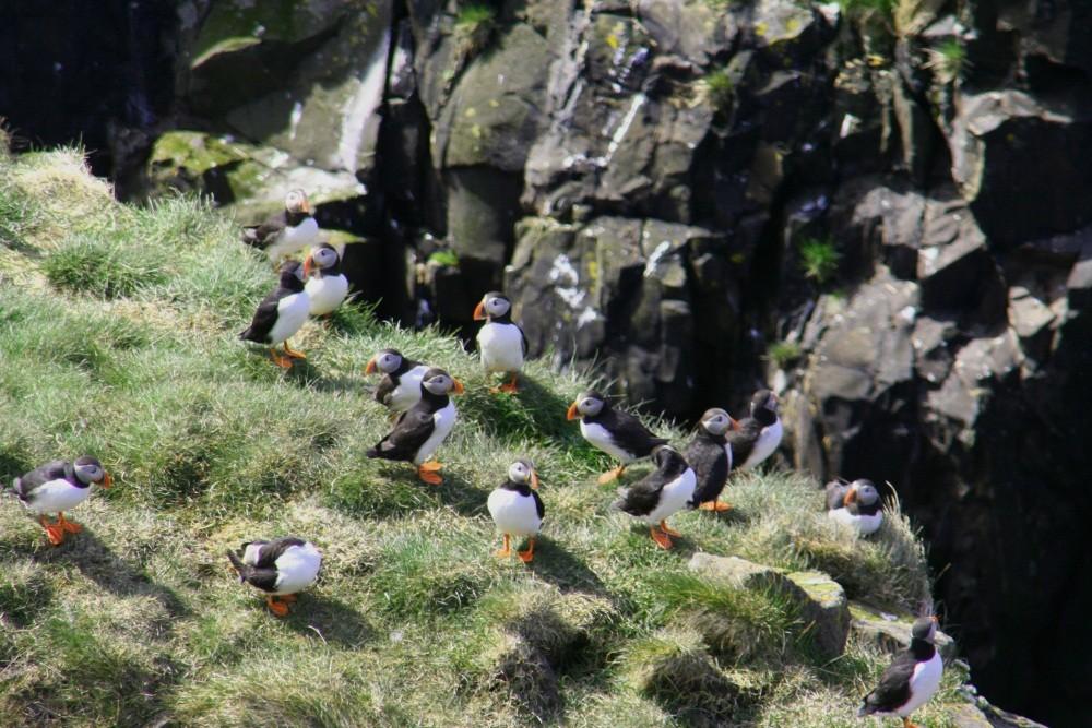 Wir besuchen den Vogelfelsen bei Höfn