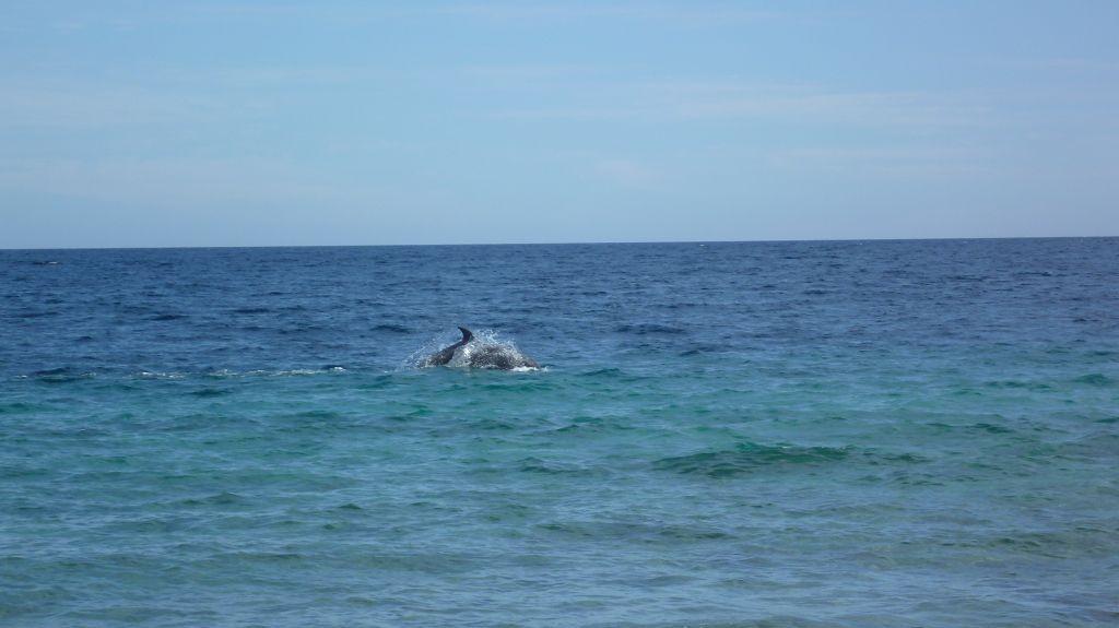 Delfine, leider weit weg