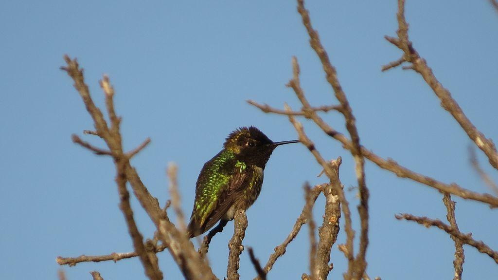 Es wird wärmer, die Kolibris kommen