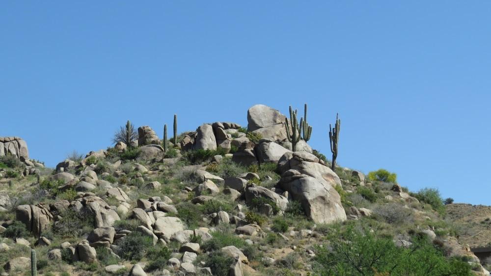 Die letzten Saguaros auf dem Weg zum Petrified Forest