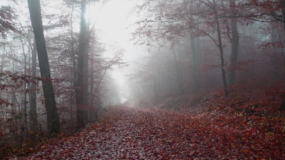 Wanderweg im Morgennebel