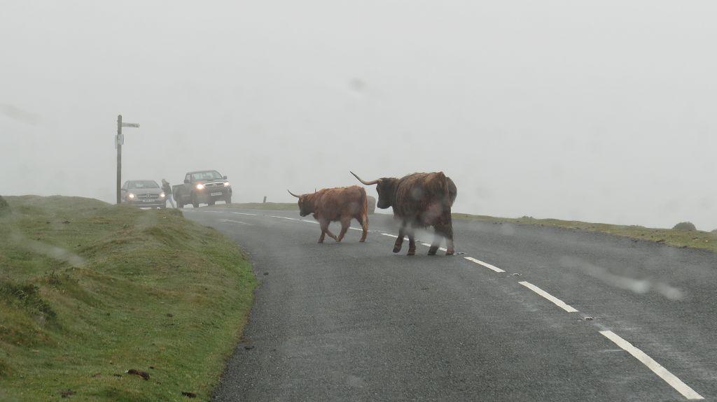 Wetter im Dartmoor Nationalpark. Dann halt erst zur...