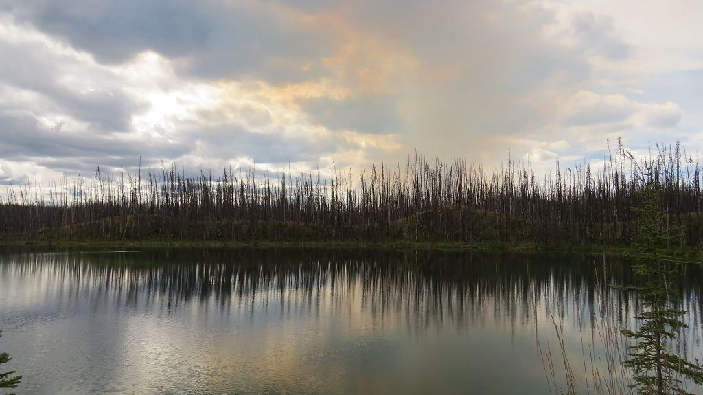 Waldbrand in der Ferne