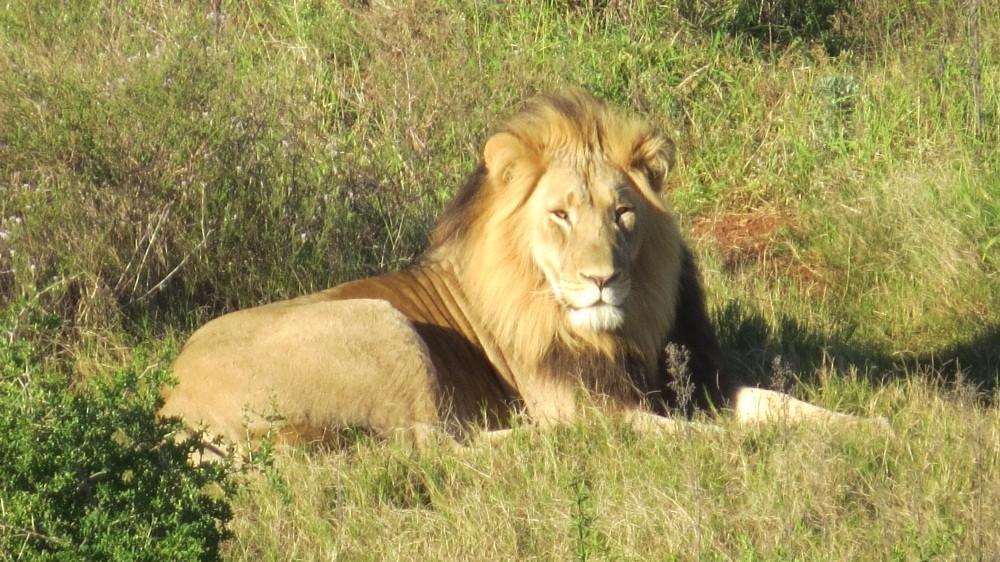 4. Tag: echt klasse der Addo-Nationalpark