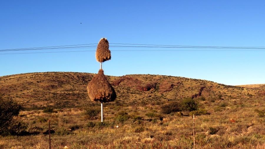 Für ein Webervogel-Nest findet sich immer ein Platz