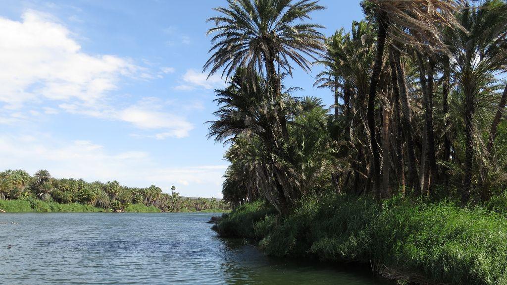Palmenoase San Ignacio