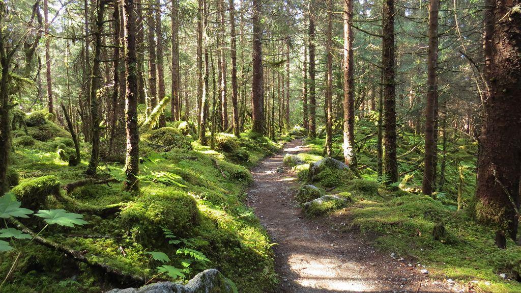 Wir wandern durch den Regenwald