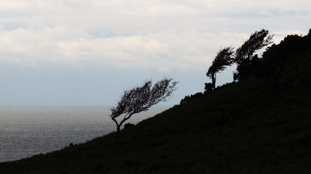 Es pfeift der Wind an den Küsten des Exmoors