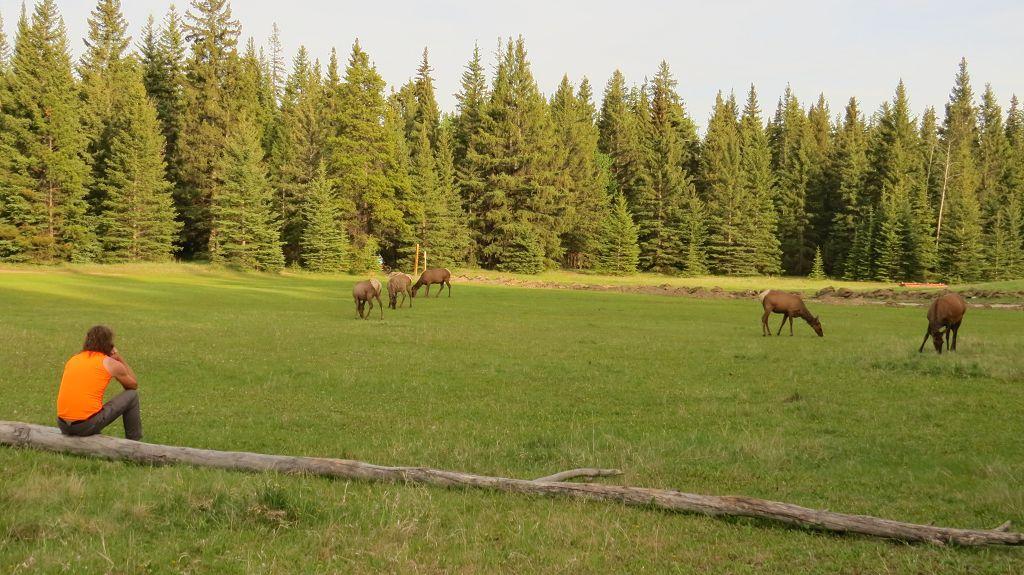 Camping in Jasper