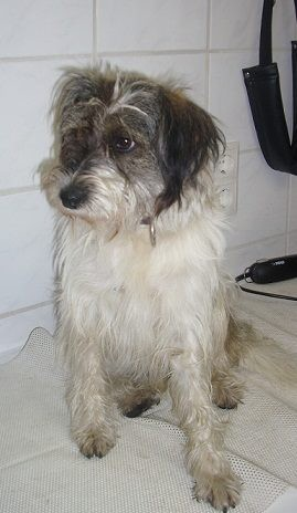 Terrier-Mix Fanny