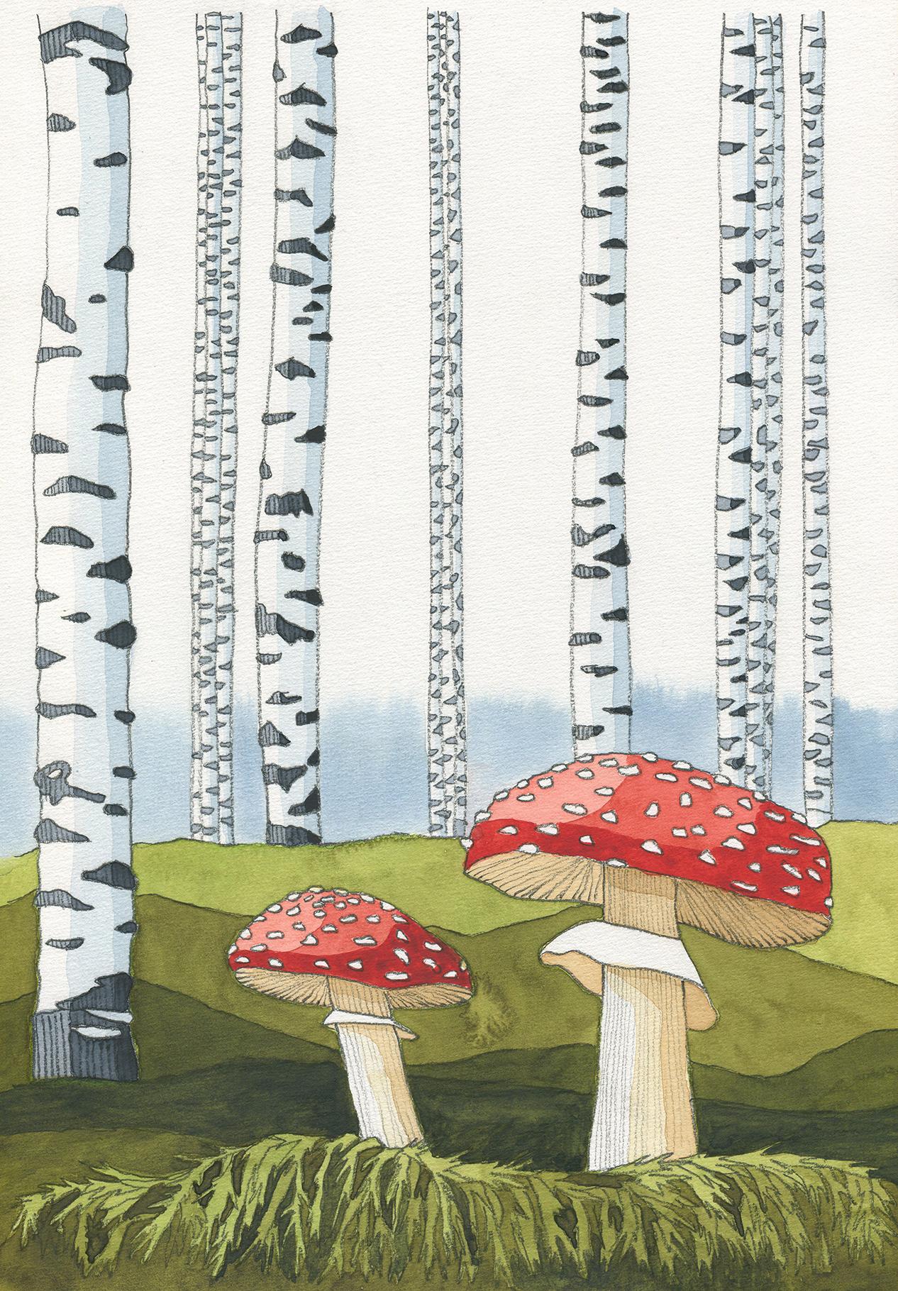 Fliegenpilze im Birkenwald