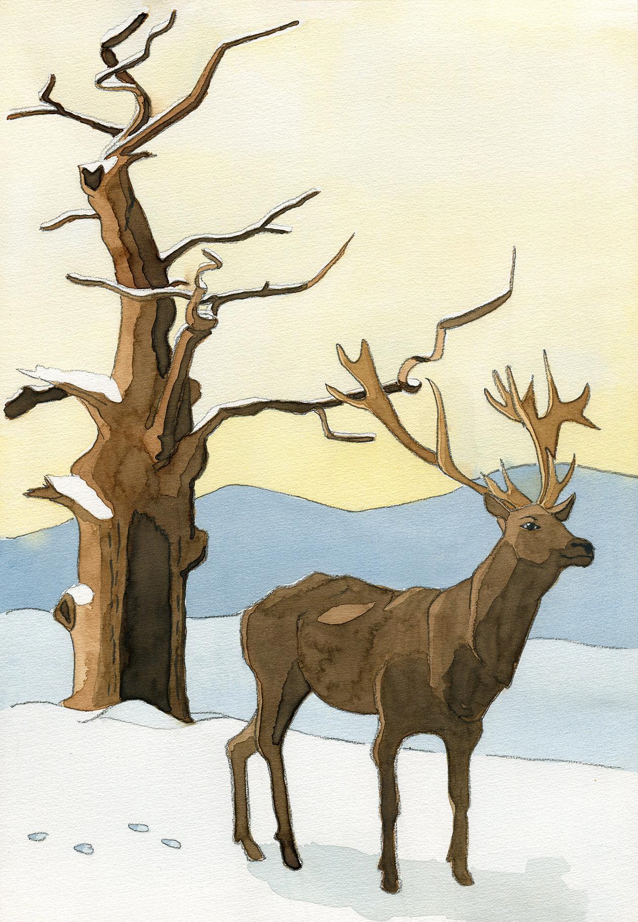 Hirsch vor altem Baum im Winter