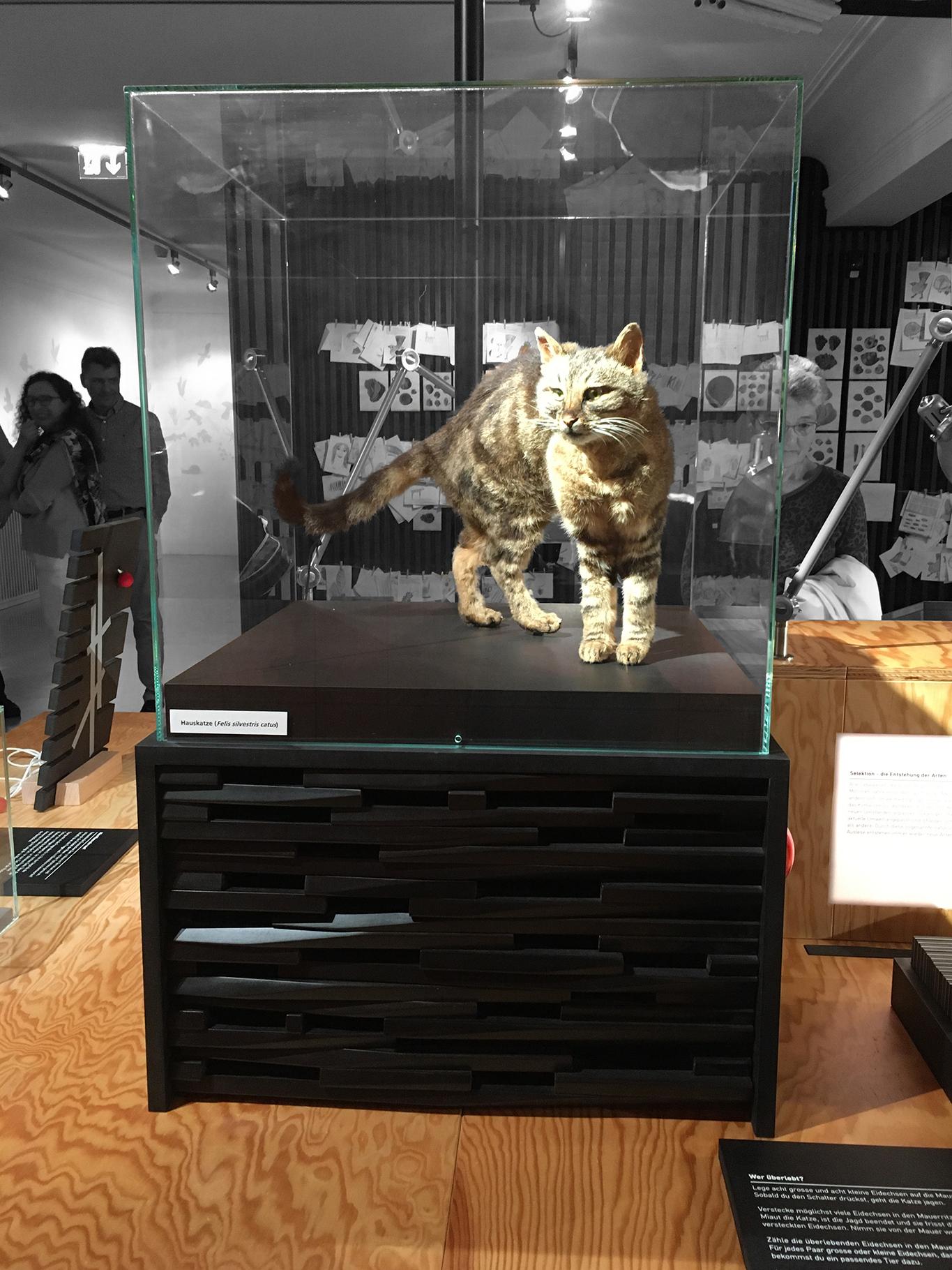 Ausstellungsgestaltung: Reto Kurth, HandWerkStätte