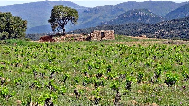 Wolfgang, einer der Leiter der Gemeinschaft, führt Hendrik durch die Landschaft. Er erblickt Felder mit alten Weinstöcken, die rekultiviert wurden. Die Weinstöcke stehen inmitten von Gräsern und Blumen