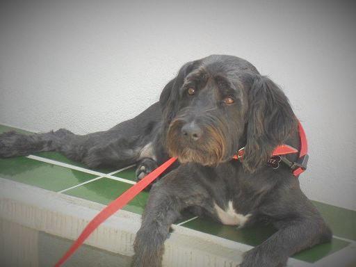 ...und von Gossos d´Atura, den katalanischen Hirtenhunden, bewacht