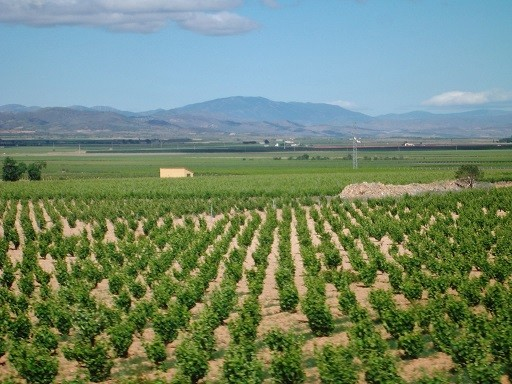 Weinfelder bei Carinena