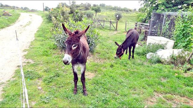 """Auf dem Hof erblickt der Ankommende Tiere: u.a. Esel, die katalanischen """"Wappentiere"""""""