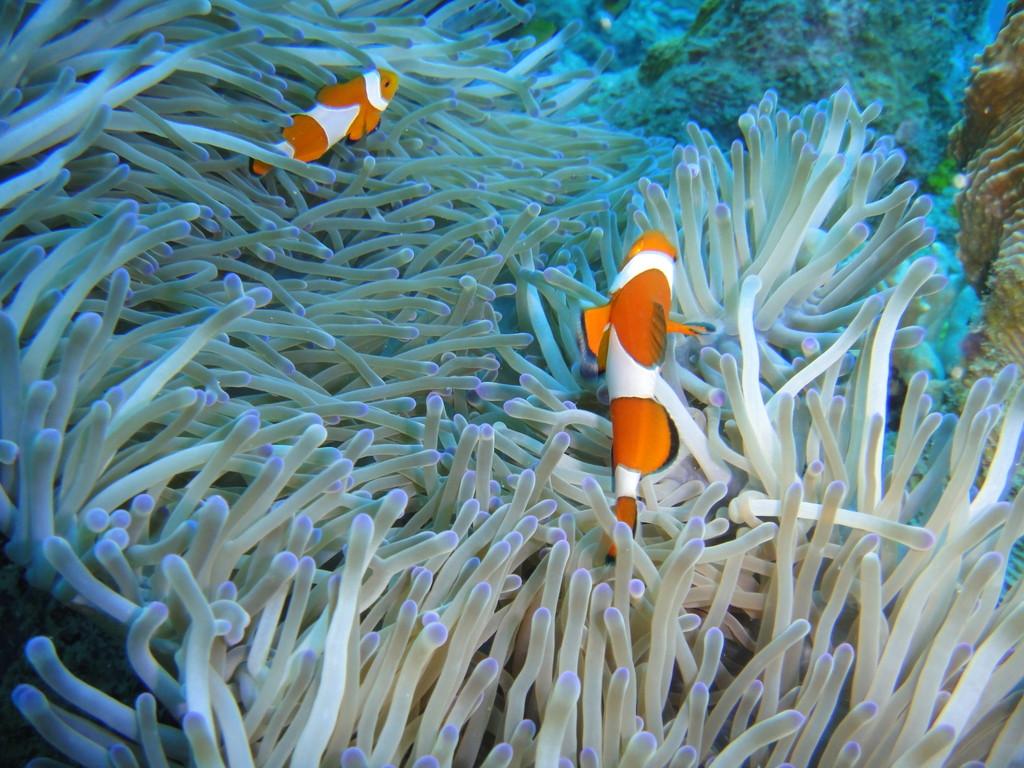Marine Sanctuary
