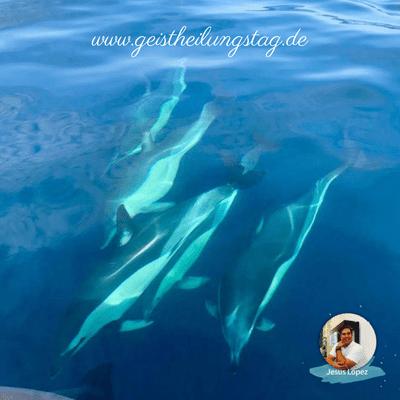 Tour zu freilebenden Delfinen