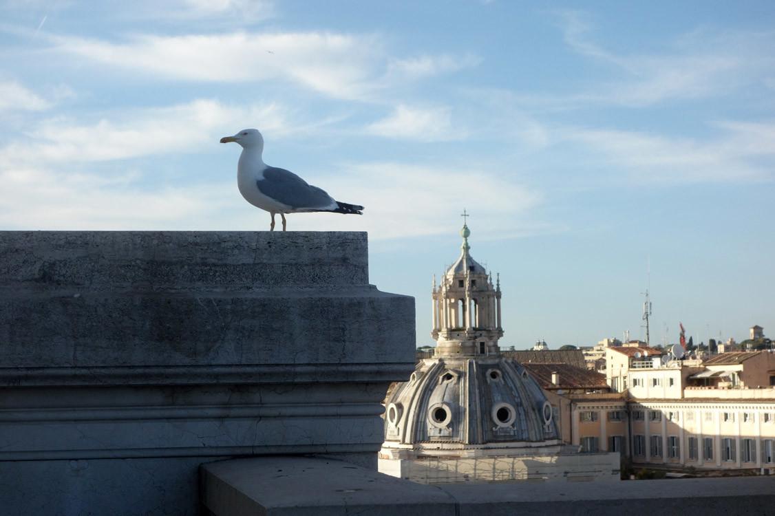 Mouette, Rome